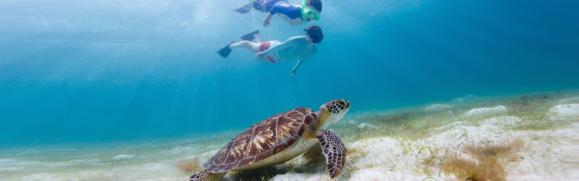 snorkeling-banner